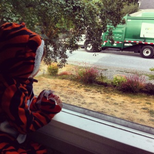 Tiger on the garbage truck prowel